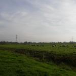 polder Groene Hart